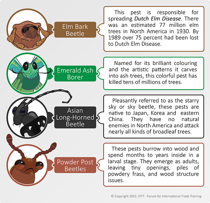 Destructive beetles that affect wooden pallets