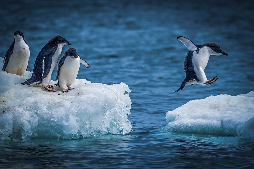 trade finance challenges - penguins