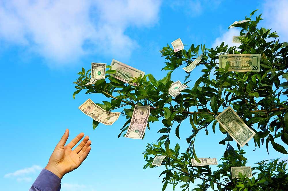 hand reaching for dollar bills on a money tree