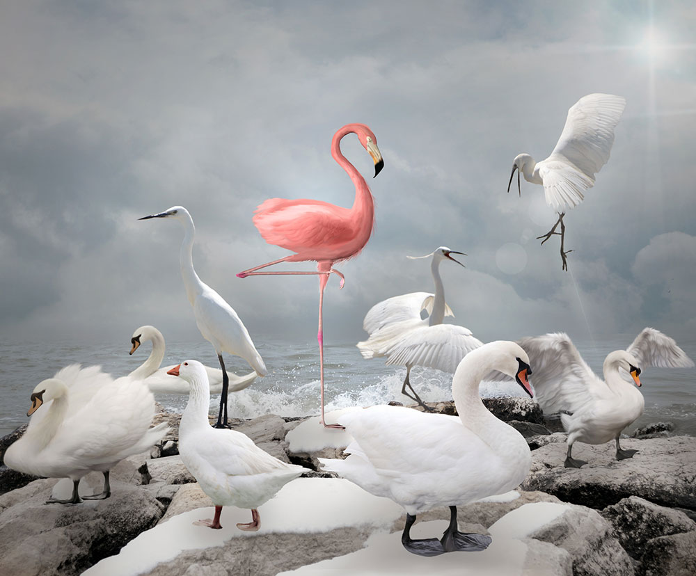 Pink flamingo surrounded by white birds at sea shore